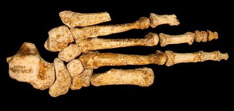 radiocarbon dating bones in the foot